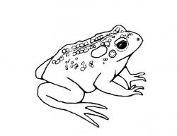 Drawn toad