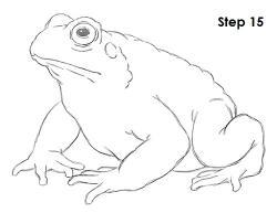 Drawn toad draw