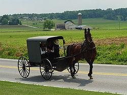 Drawn wagon amish horse