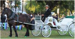 Drawn trolley russian horse