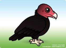 Drawn turkey vulture