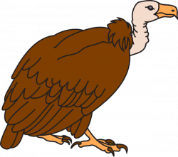 Drawn turkey vulture clipart