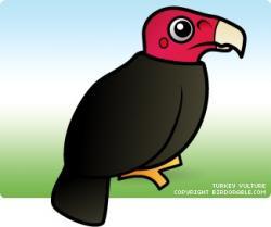 Drawn turkey vulture cute