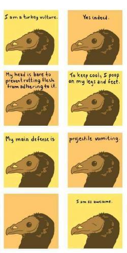 Drawn turkey vulture i am so awesome