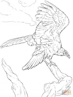 Drawn turkey vulture sketch