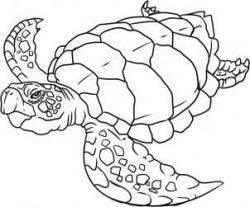 Drawn turtle