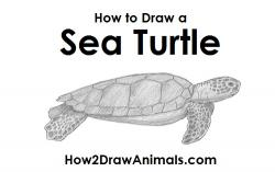 Drawn sea turtle sea tortoise