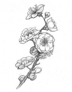 Drawn ume blossom