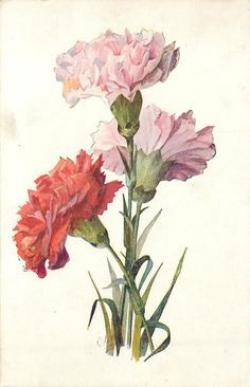 Drawn vase carnation flower