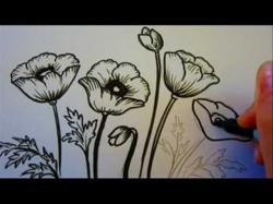 Drawn poppy pencil drawing