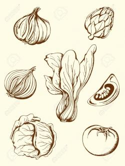 Drawn vegetables vintage