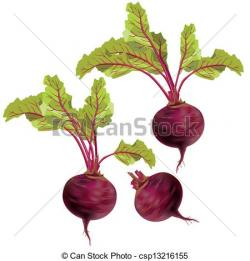 Drawn vegetable beet