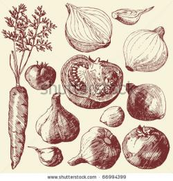 Drawn onion fruit and vegetable