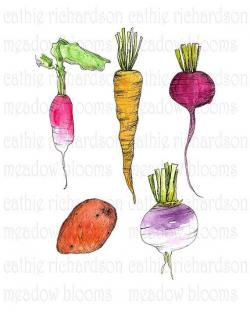 Drawn vegetables root vegetable