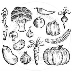Drawn vegetable simple