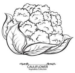 Cauliflower clipart sketch