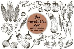 Drawn vegetables vector