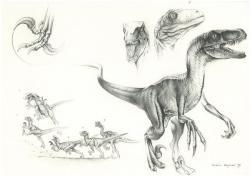 Drawn velociraptor male
