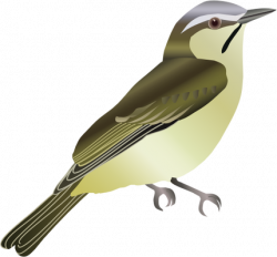 Drawn vireo vector