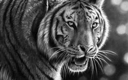 Drawn wallpaper tiger