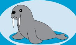 Drawn walrus