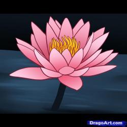 Drawn lily water hyacinth