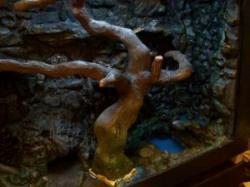 Drawn water dragon bonsai tree