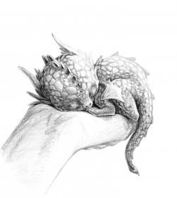 Drawn dragon tiny dragon