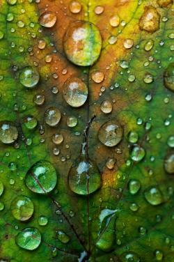 Drawn water droplets dew drop