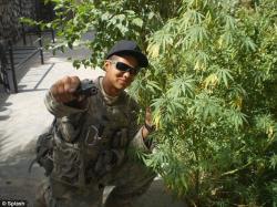 Drawn weed army