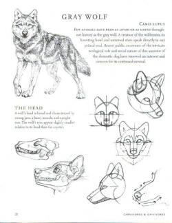 Drawn werewolf anatomy