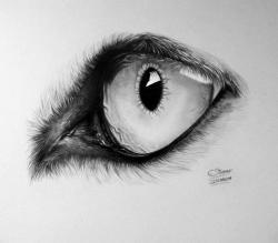 Drawn werewolf dragon eye
