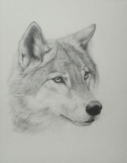 Drawn werewolf grey