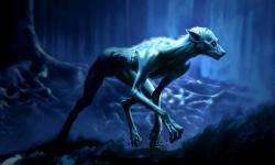 Drawn wolfman harry potter werewolf