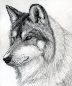 Drawn werewolf pencil drawing