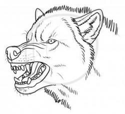 Drawn wolf vicious wolf