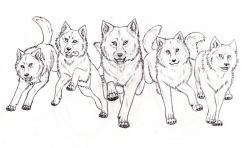 Drawn wolf wolf pack