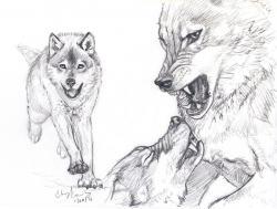 Drawn wolf wolf fight