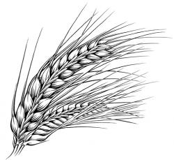 Barley clipart black and white