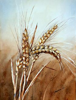 Drawn wheat