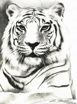 Drawn tiiger black and white