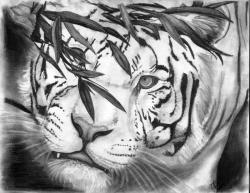Drawn white tiger