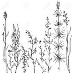 Drawn wildflower line