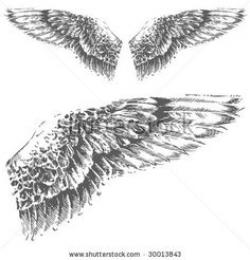 Drawn wings eagle wing