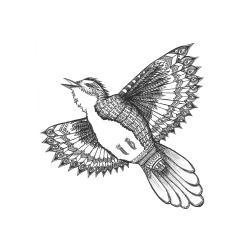 Drawn brds spread wing