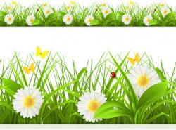 Chamomile clipart spring
