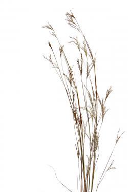 Moss clipart prairie grass