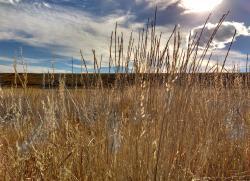 Dry Grass clipart prairie grass