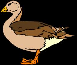 Albatross clipart goose