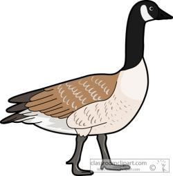 Goose clipart canadian goose